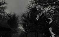 Midnight Hollow(画像加工なしで白黒!)